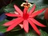 passiflora-xpiresea-070623_k1