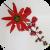 Motiv Passiflora racemosa