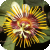 Motiv Passiflora holosericea