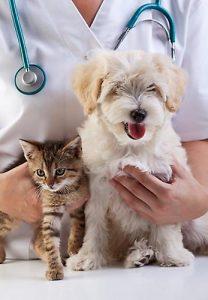 Passiflora Homöopathie kann für kranke Hunde und Katzen eine natürliche Alternative zu chemischen Medikamenten sein.