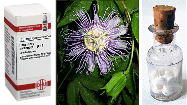 passiflora hom opathie f r katzen. Black Bedroom Furniture Sets. Home Design Ideas