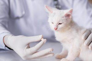Passiflora Homöopathie für Katzen ist eine sanfte Alternative zur Schulmedizin!