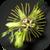 Motiv Passiflora 'Mantega'