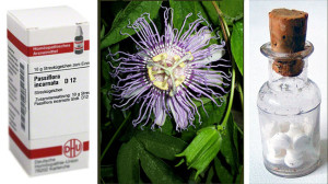 Passiflora Homöopathie für Katzen wird aus Passiflora incarnata hergestellt.